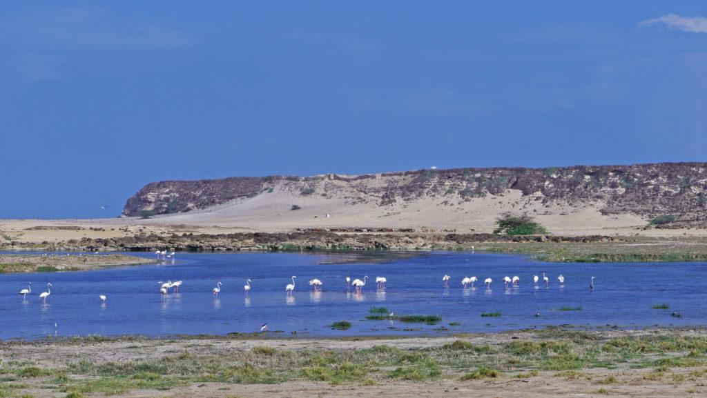 Khor Rori lagoon is a paradise for lovers of birdwatching many waders can be spotted here. Samharam Unesco site. Salalah East Tour.