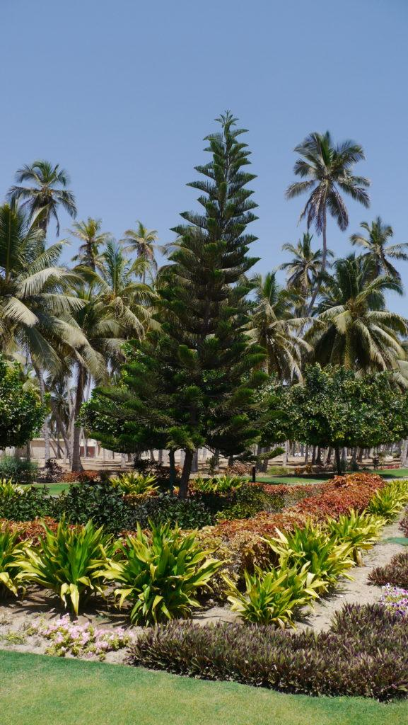 Al-Husn Palace is the seat of Sultan in Salalah, Dhofar Governorate, the palace is surrounded by perfectly mantained gardens.