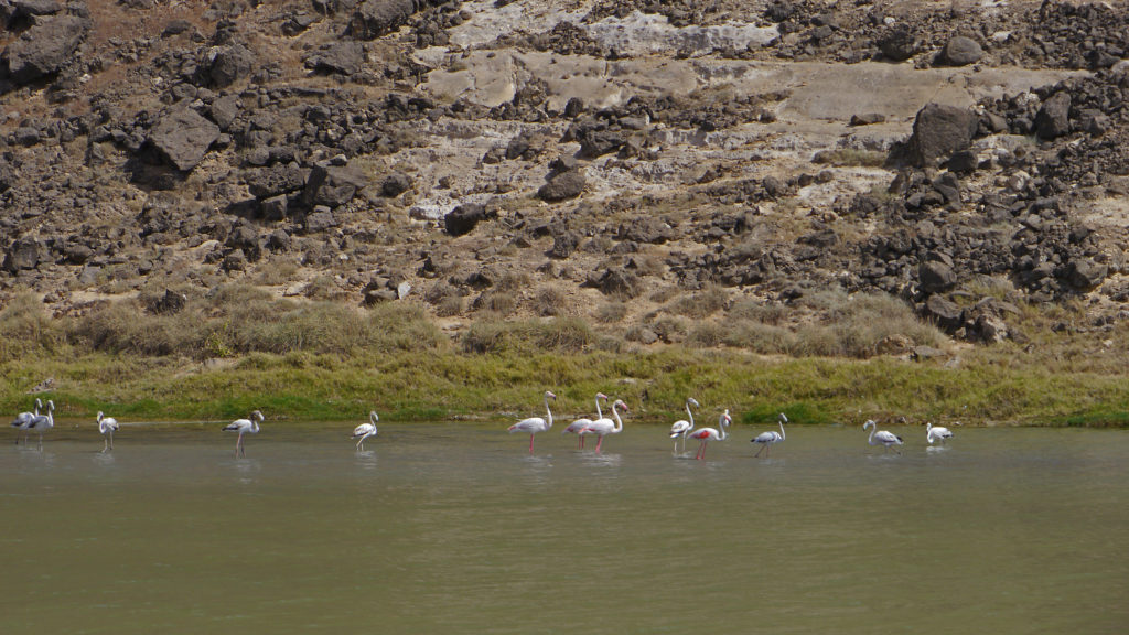 Mughsail lagoon lies at the beginning of stunning Mughsail beach. Flamingoes are common visitors of this place. Salalah west coast tour.